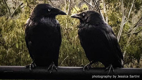 shelia-taylor-following-my-songline-two-crows-photograph-by-jessica-sartini-small