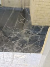 shelia-taylor-following-my-songline-dusty-web