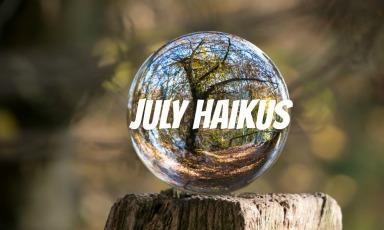 shelia-taylor-following-my-songline-july-haikus