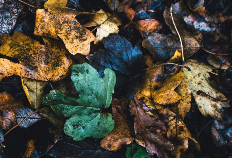 leaves-tired