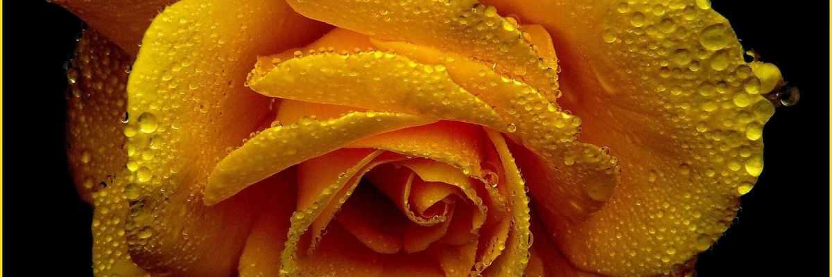 forgotten-flowers