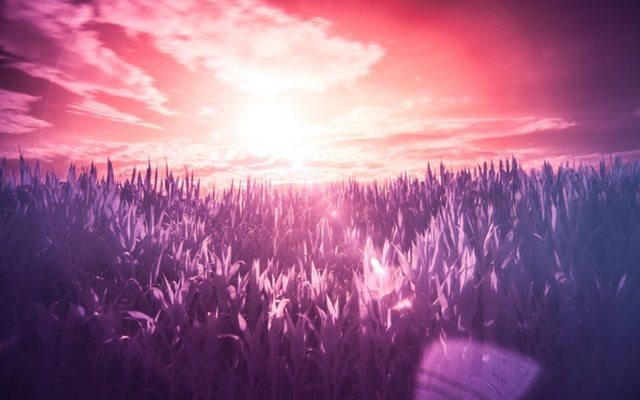 red-sun-purple-dream